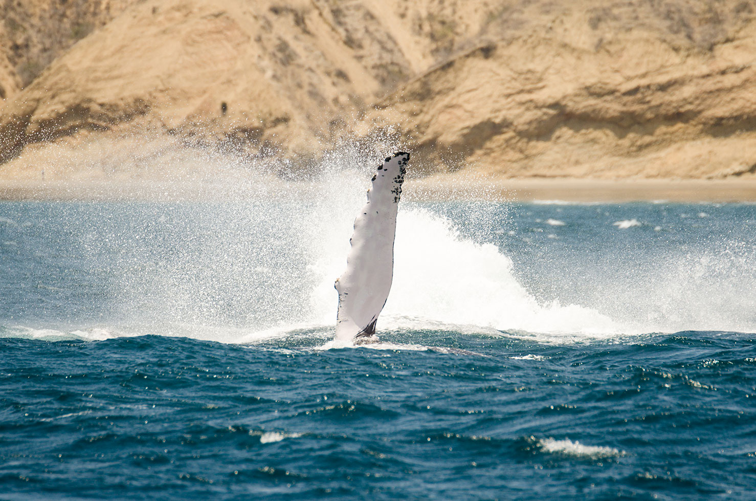 Whale Watching, San Mateo, 31 August 2019