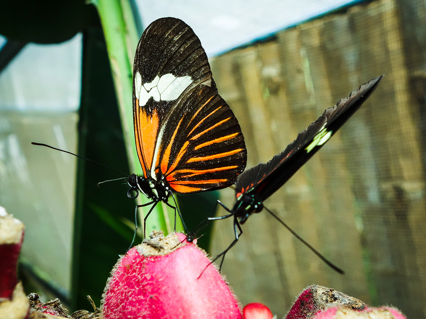 Nathaly Butterfly Garden
